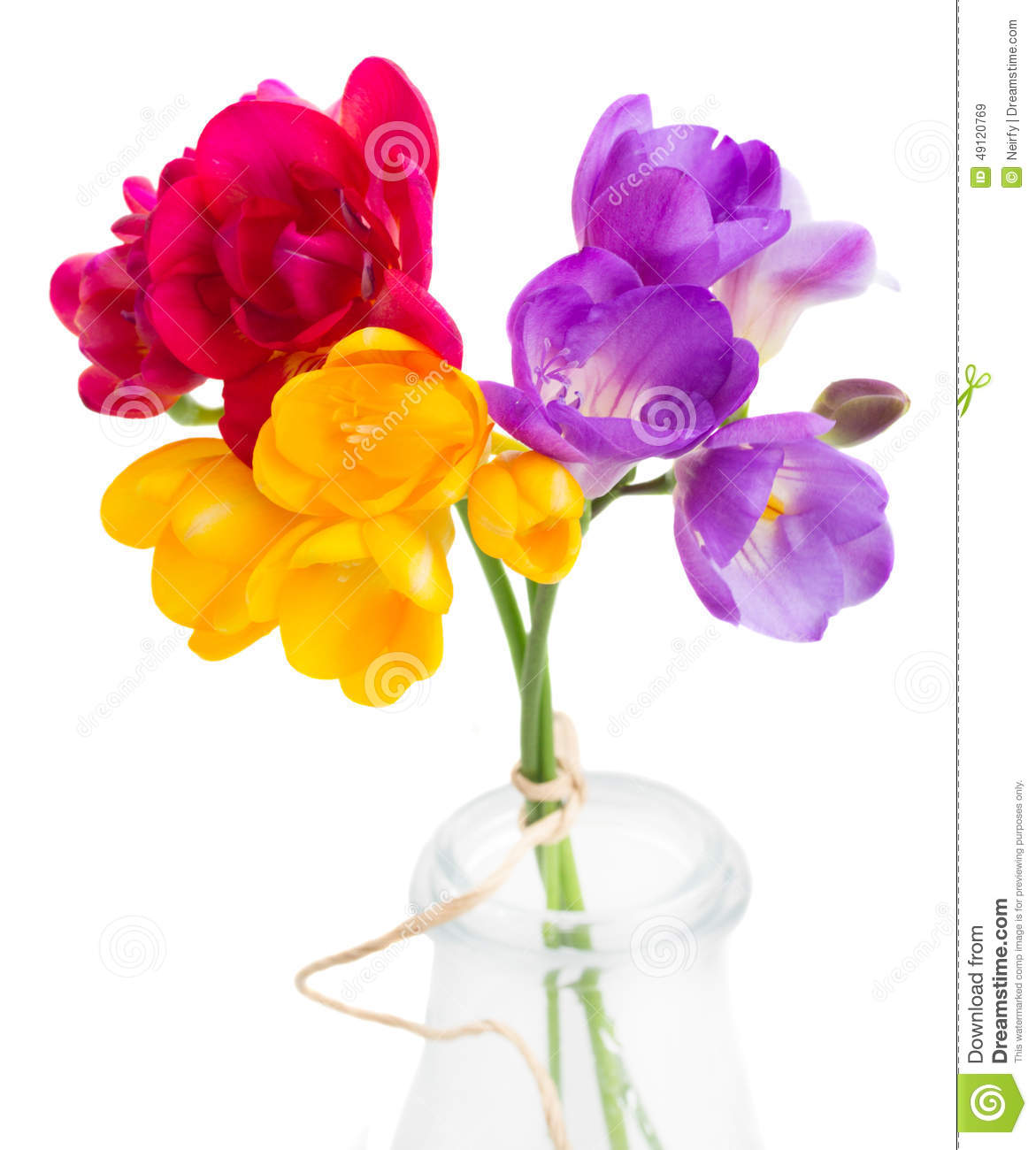 Blue Pink And Yellow Freesia Flowers Stock Image Image Of Design