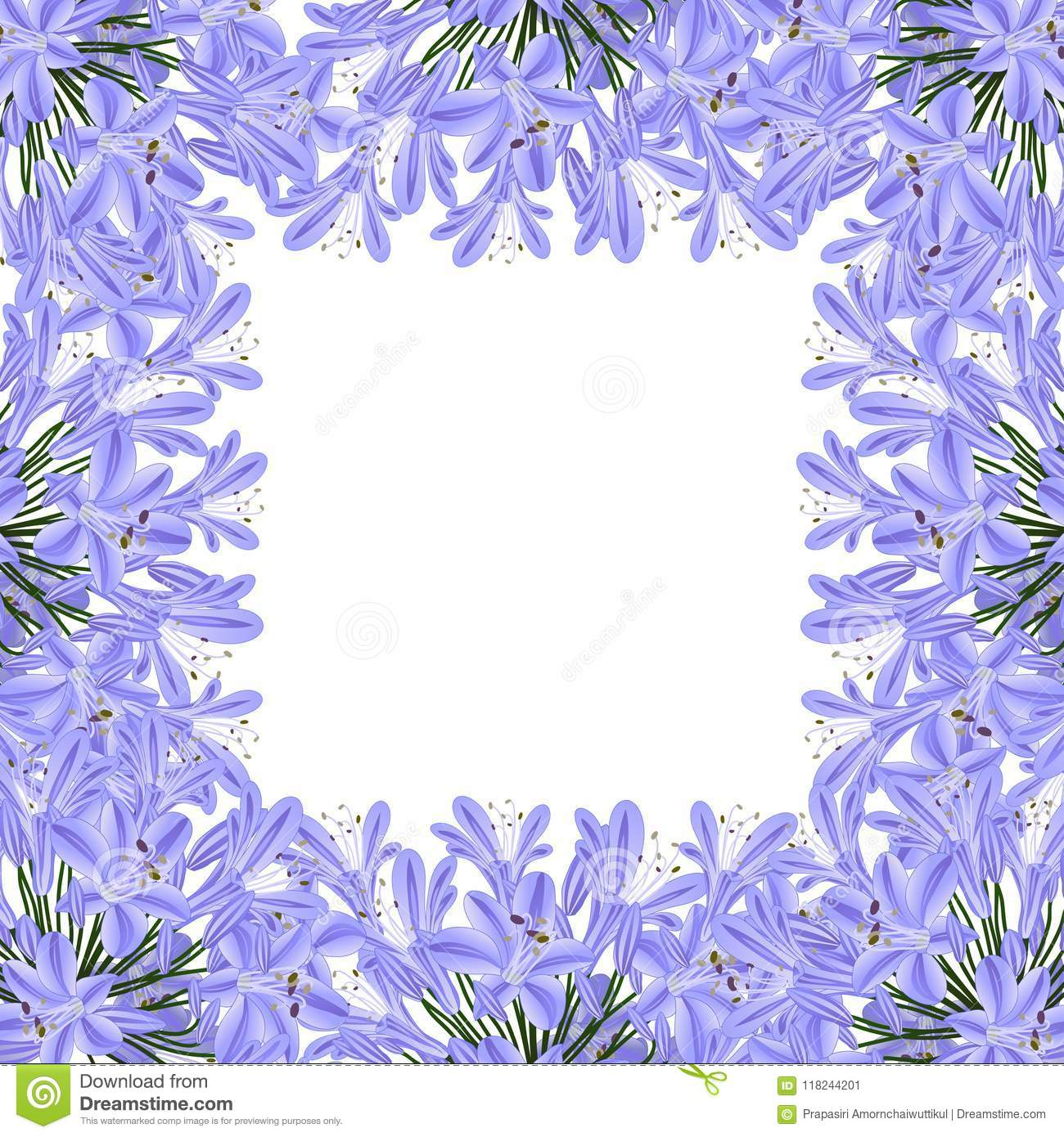 Blue Purple Agapanthus Border Lily Of The Nile African Lily