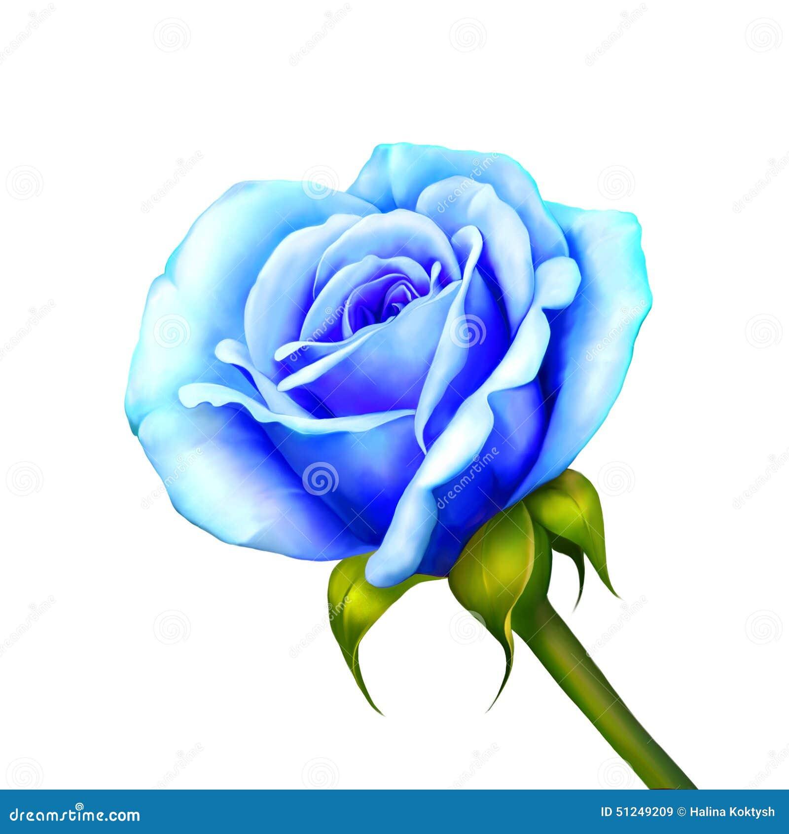 Blue Rose Flower Isolated On White Background Stock Illustration