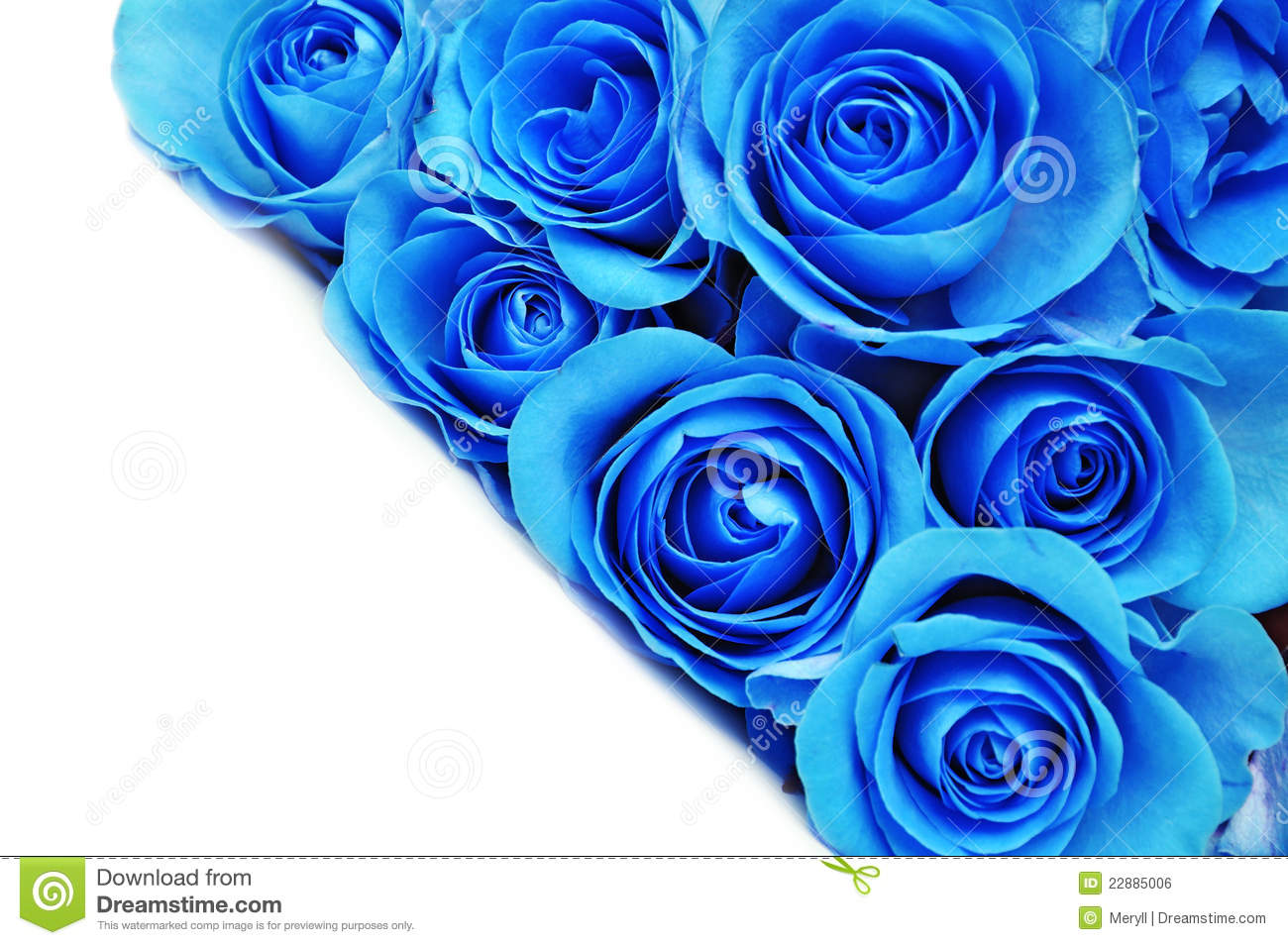 blue rose flowers stock photo image of leaves background 22885006