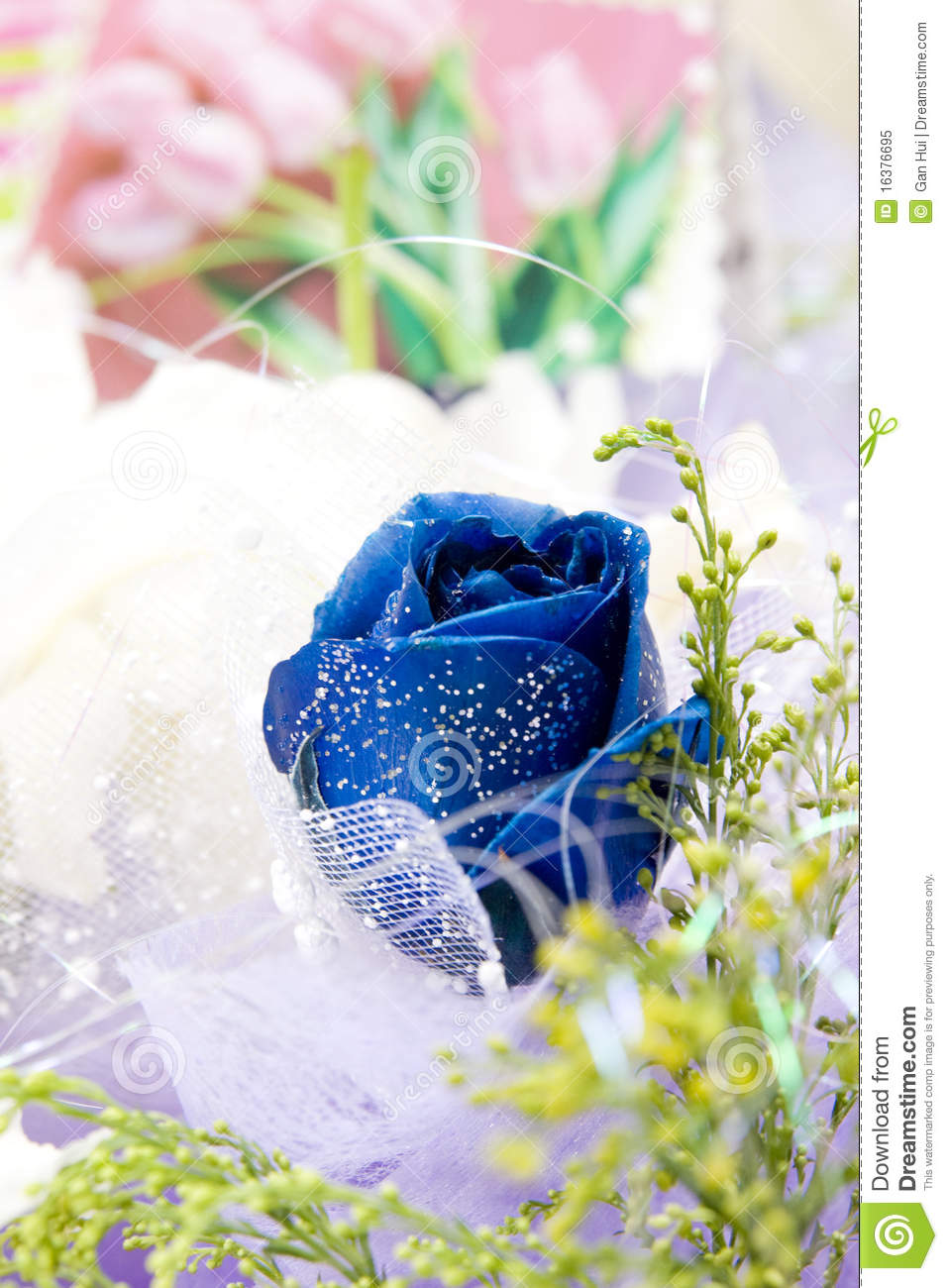 Blue rose in gift flowers stock image image of blossom 16376695 blue rose in gift flowers royalty free stock photo negle Image collections