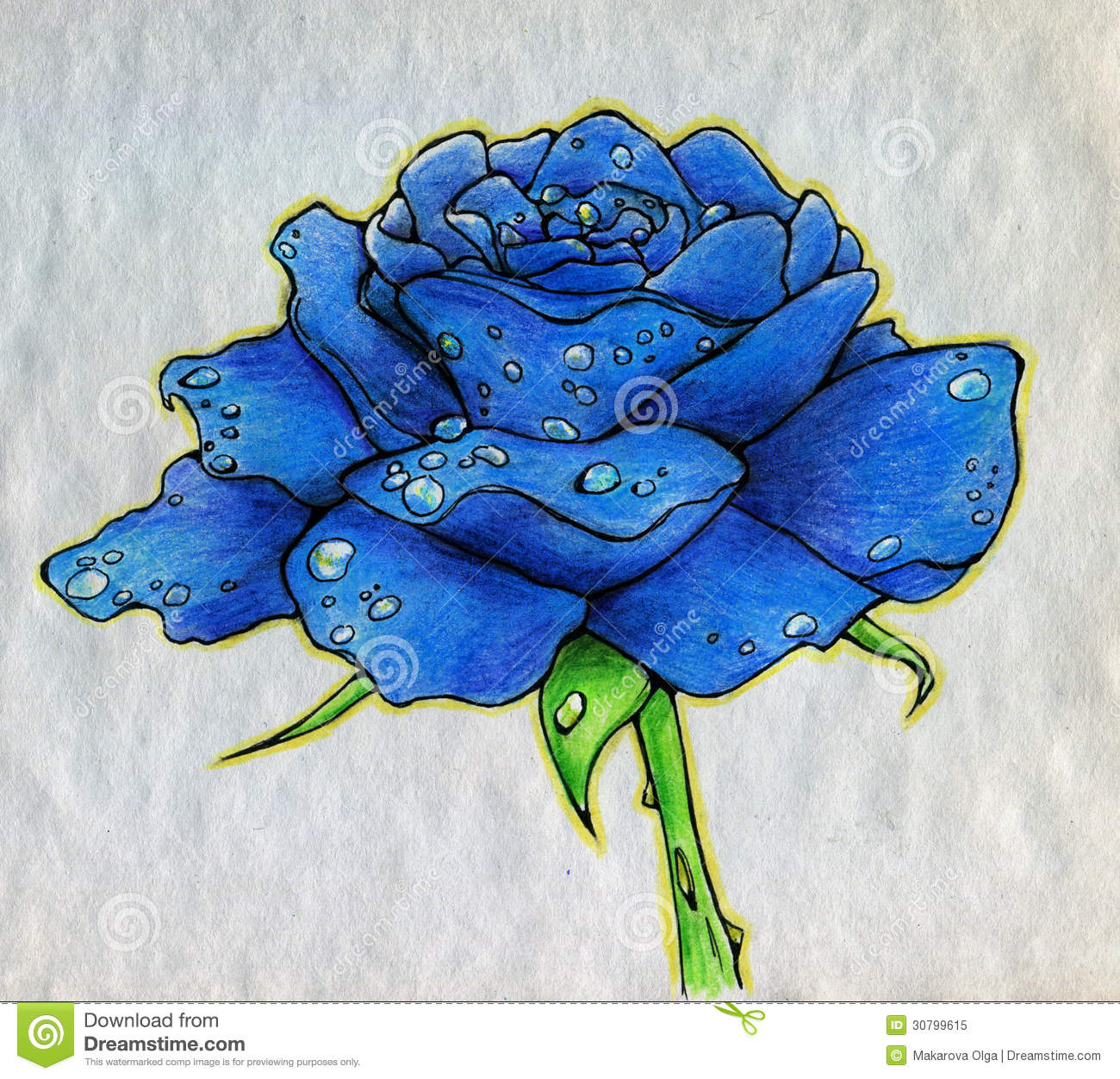 Blue rose on rough paper stock illustration image of rare for How are blue roses made