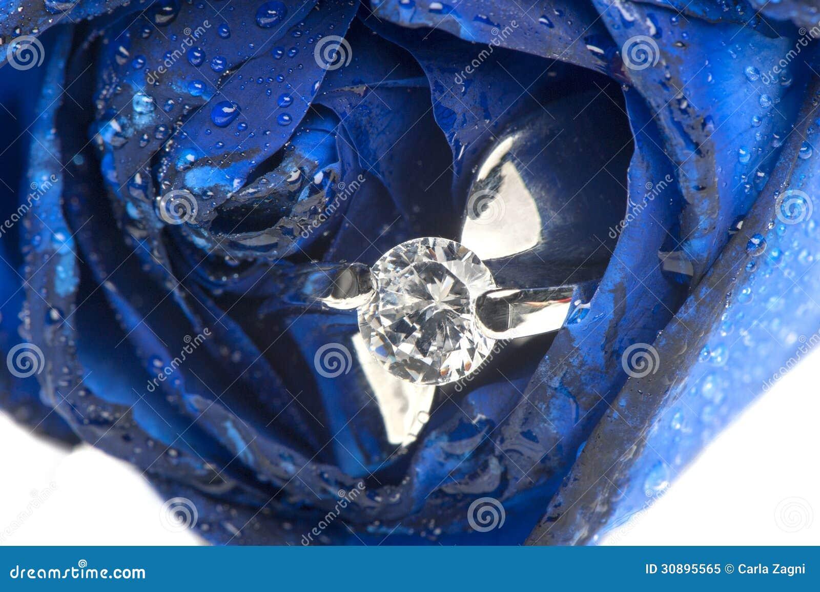 royalty free stock photography blue roses wedding rings white background image blue wedding rings Blue roses and wedding rings Royalty Free Stock Photo