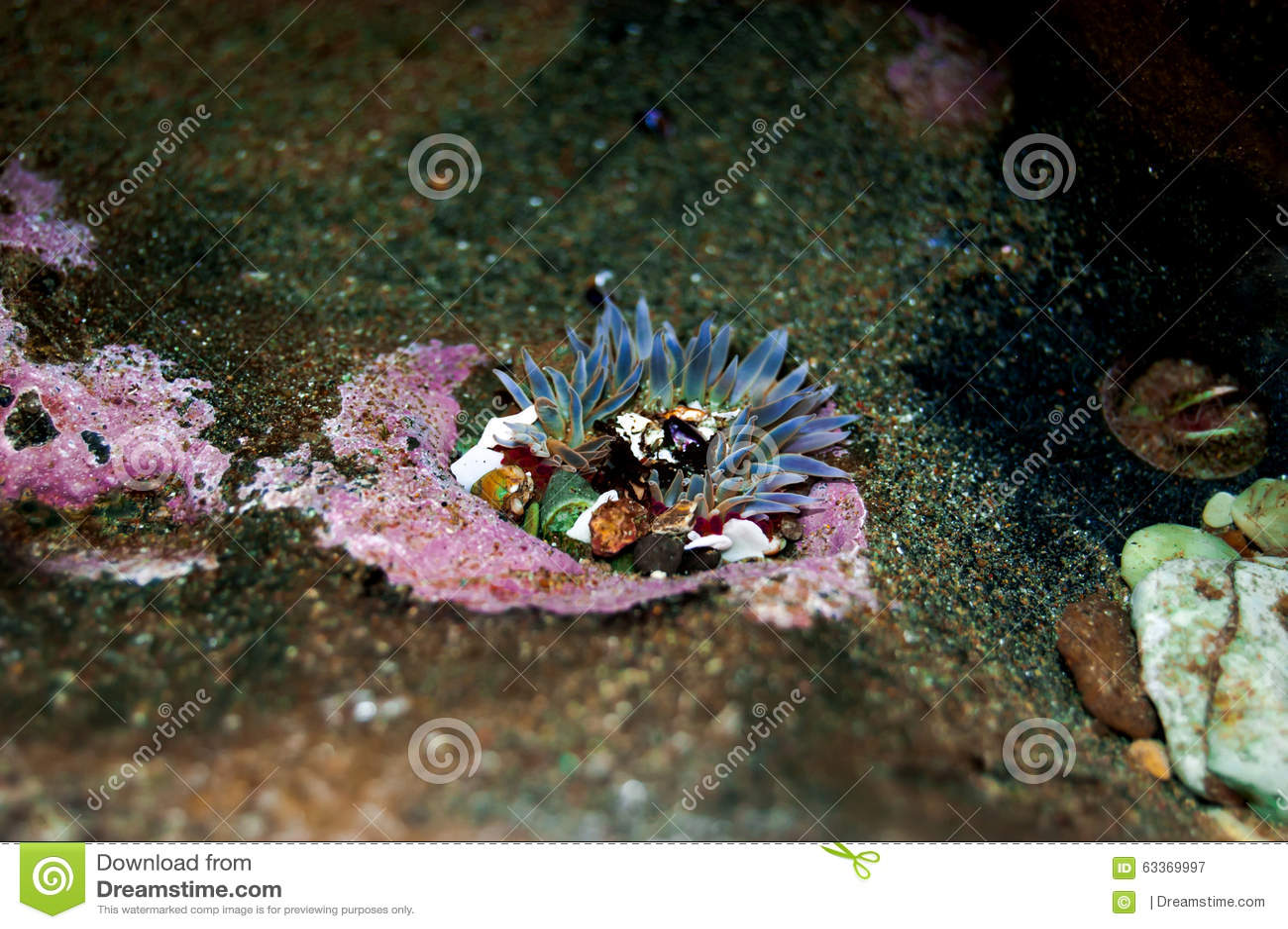the clone specific segregation of sea anemone Title: clone specific segregation in the sea anemone anthopleura elegantissima created date: 20160809131922z.