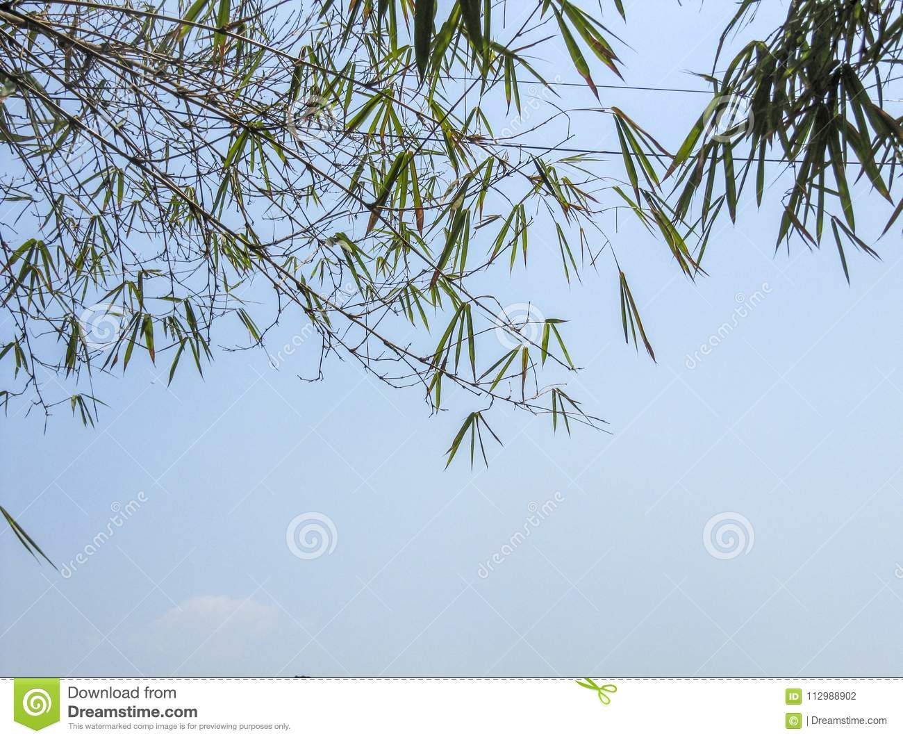 Blue skies beyond bamboo canapy