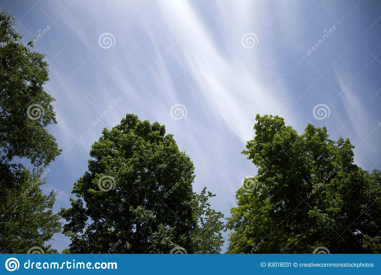 Download Blue skies over tree tops stock image. Image of green - 83018031