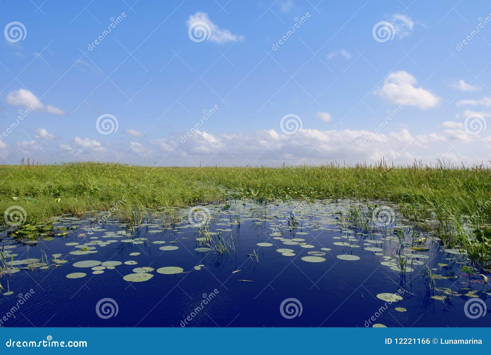 Blue sky in Florida Everglades wetlands green plan
