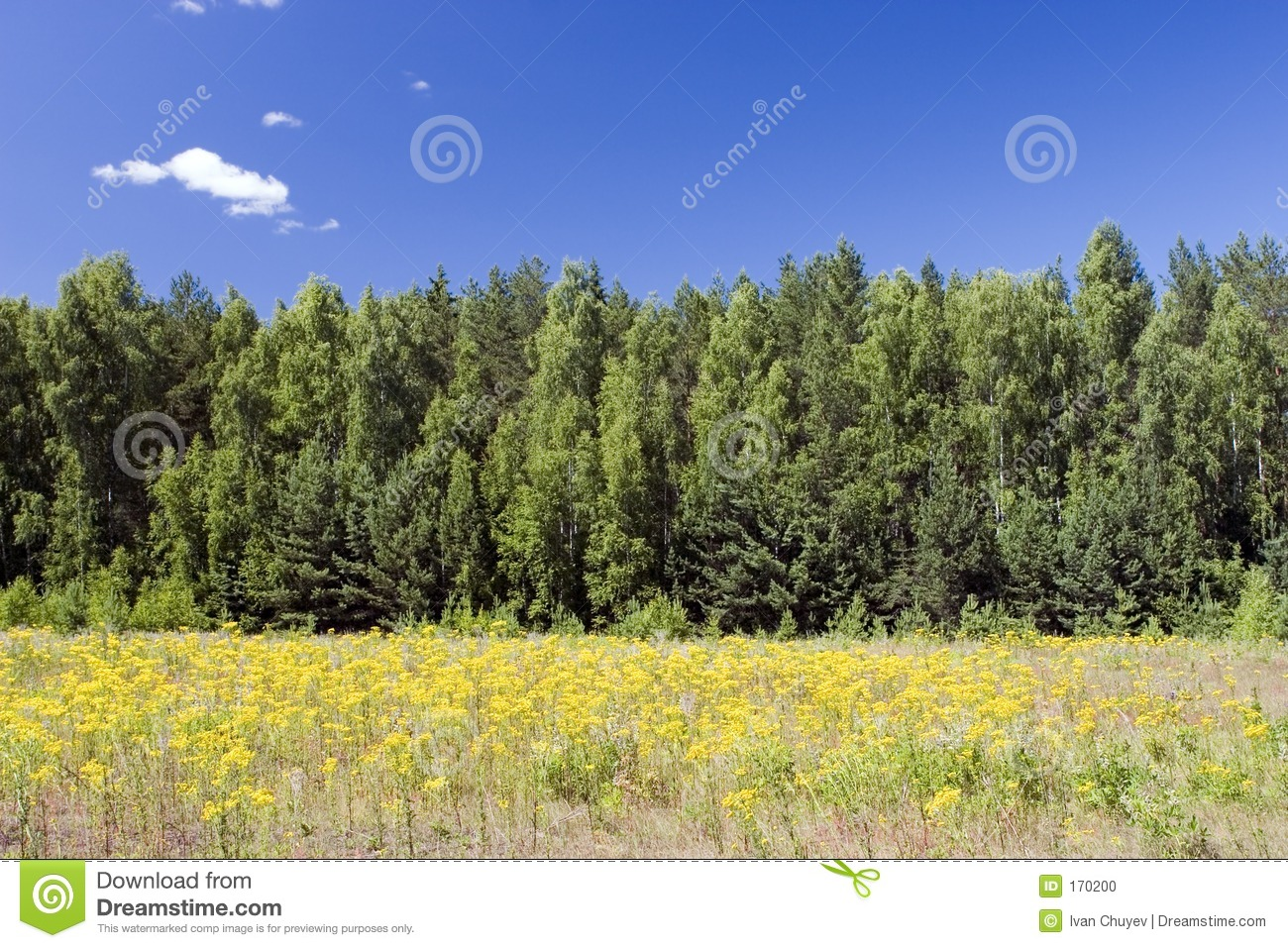 Blue sky, green forest and yellow field