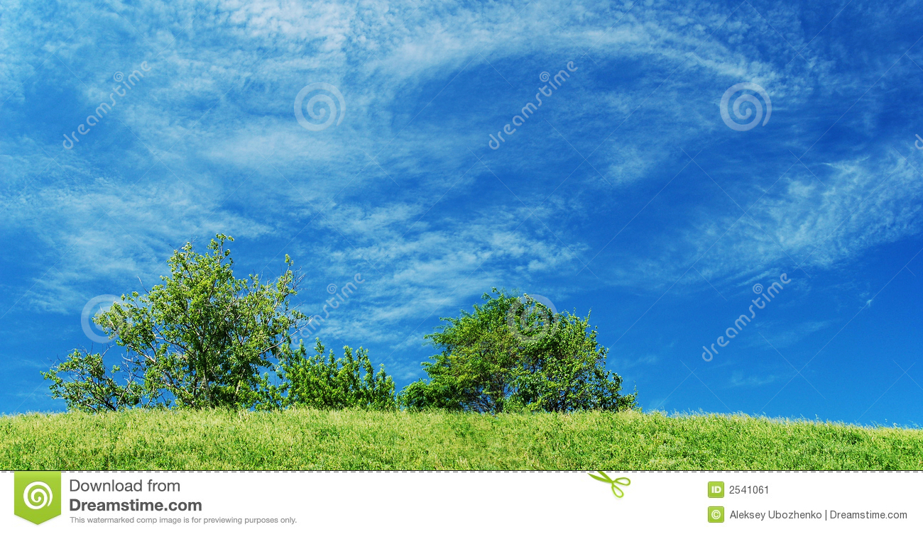 Blue Sky With Green Grass And Tree Stock Image - Image ...