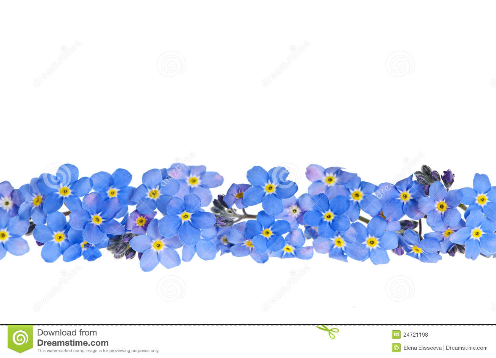blue spring flower border royalty free stock photos image 24721198