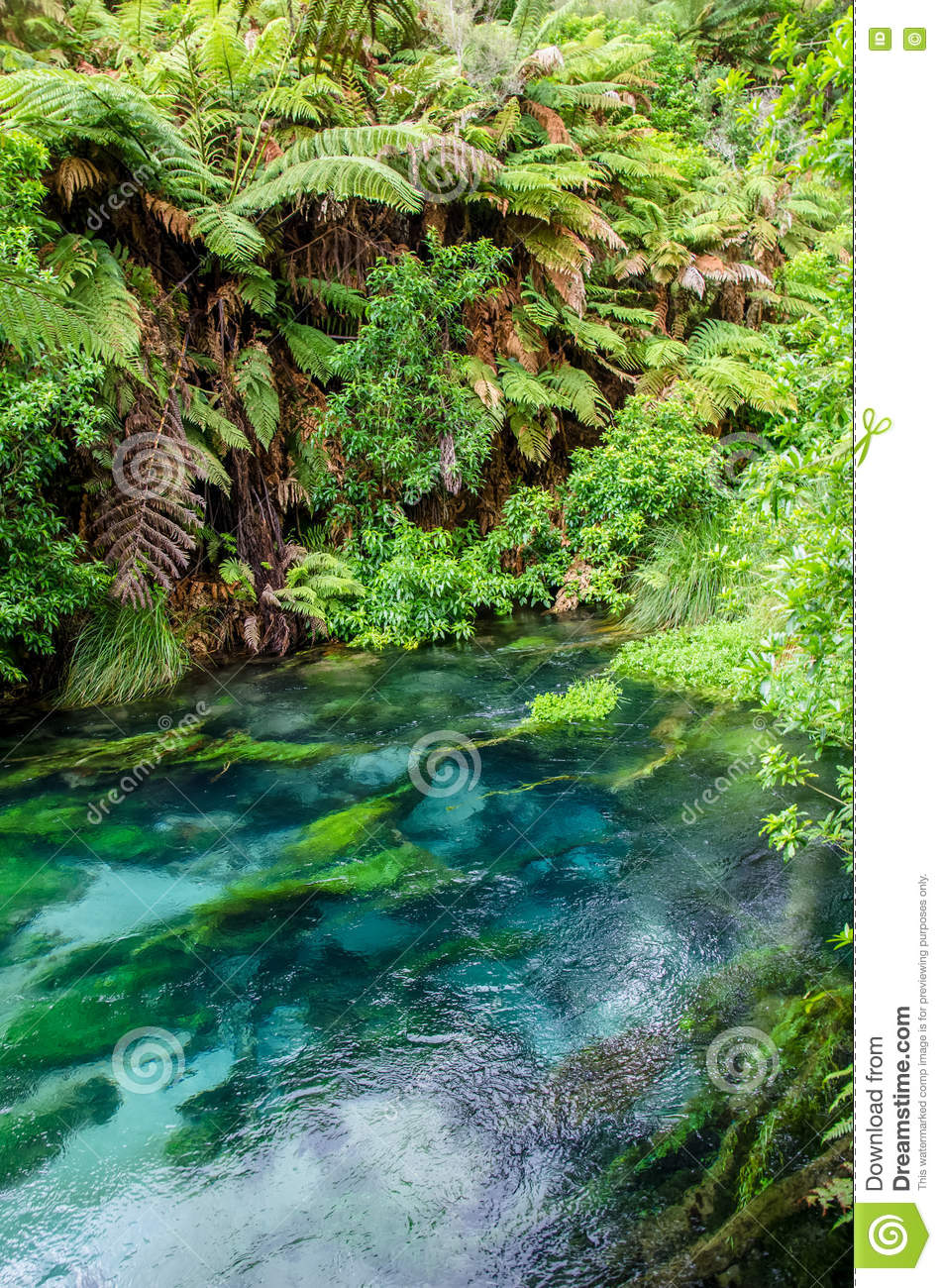 Blue Spring which is located at Te Waihou Walkway,Hamilton New Zealand.