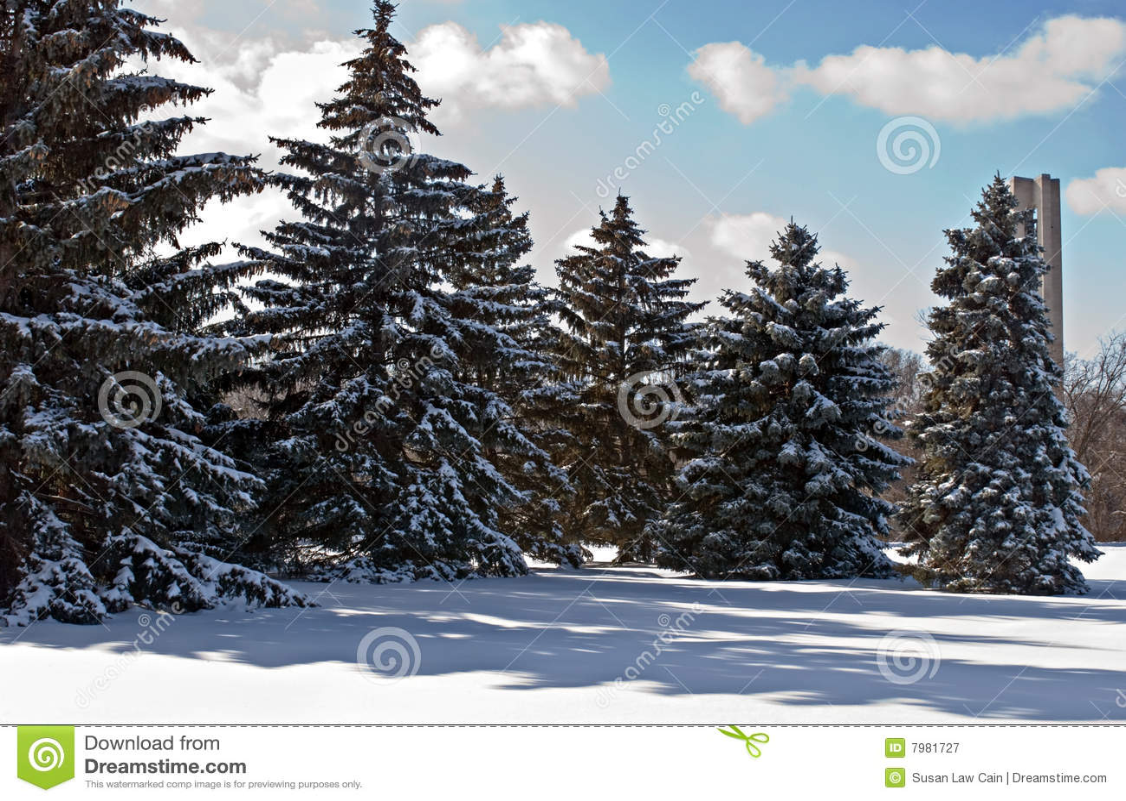 spruce tree snow - photo #42