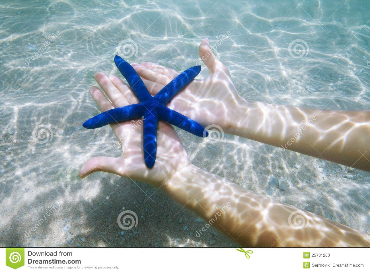 Blue starfish on palms