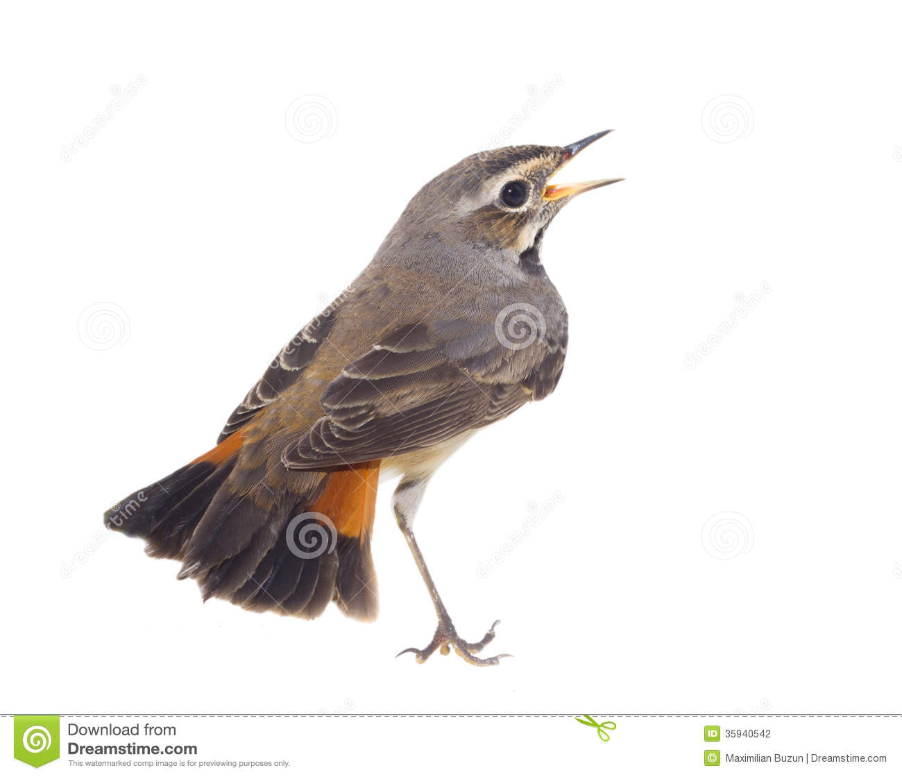 Galleries Related: Robin Bird Clipart Black And White , Robin Bird ...