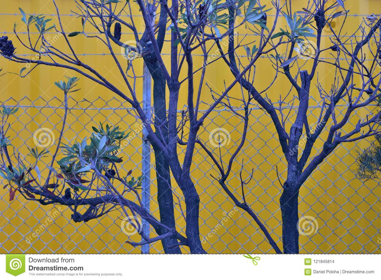 Blue tree and yellow wall stock photo. Image of metal - 121845814
