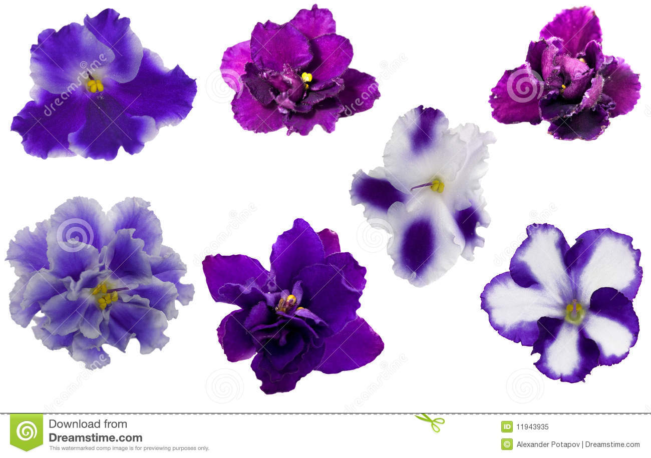 Blue Violet Flowers Collection Stock Image - Image: 11943935
