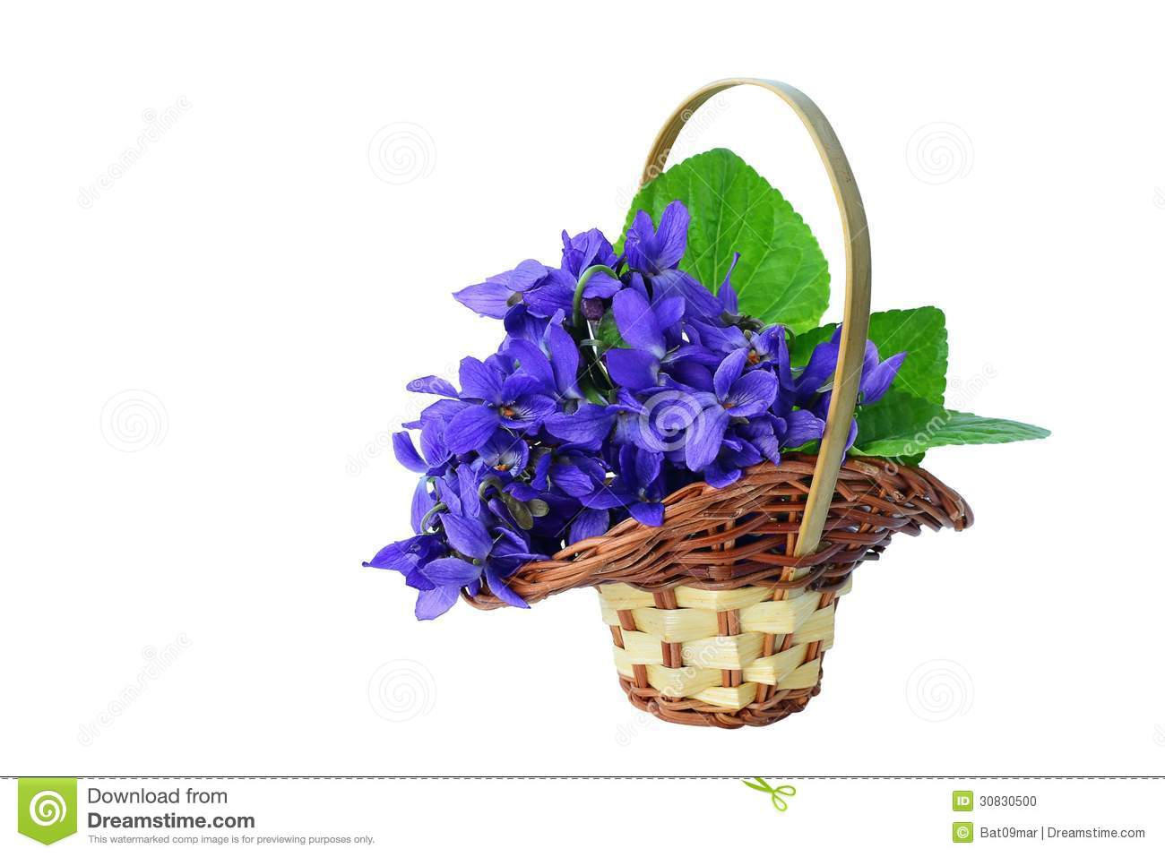 Blue Violets In A Basket Isolated Stock Photo - Image of ...