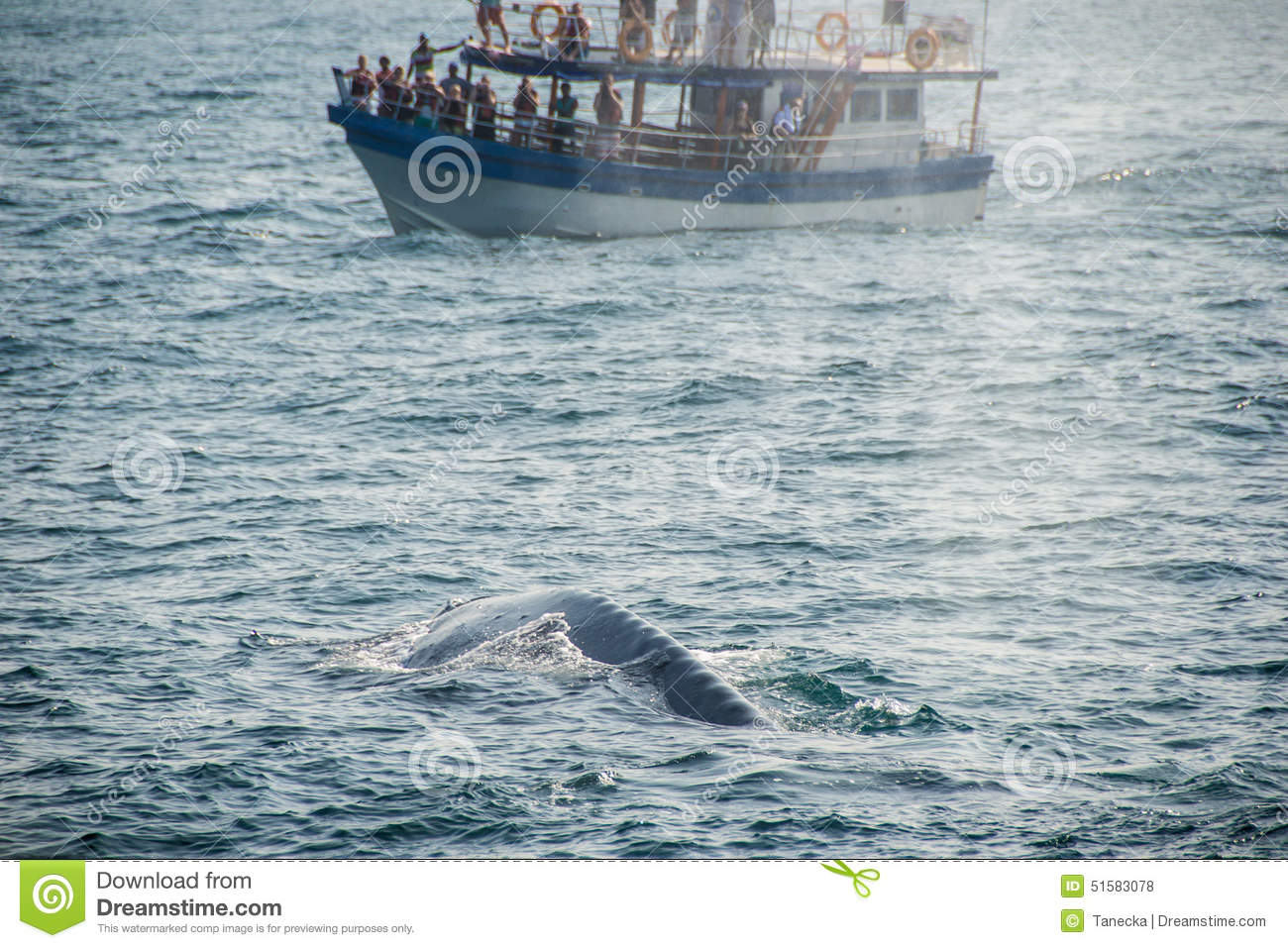 Blue Whale back