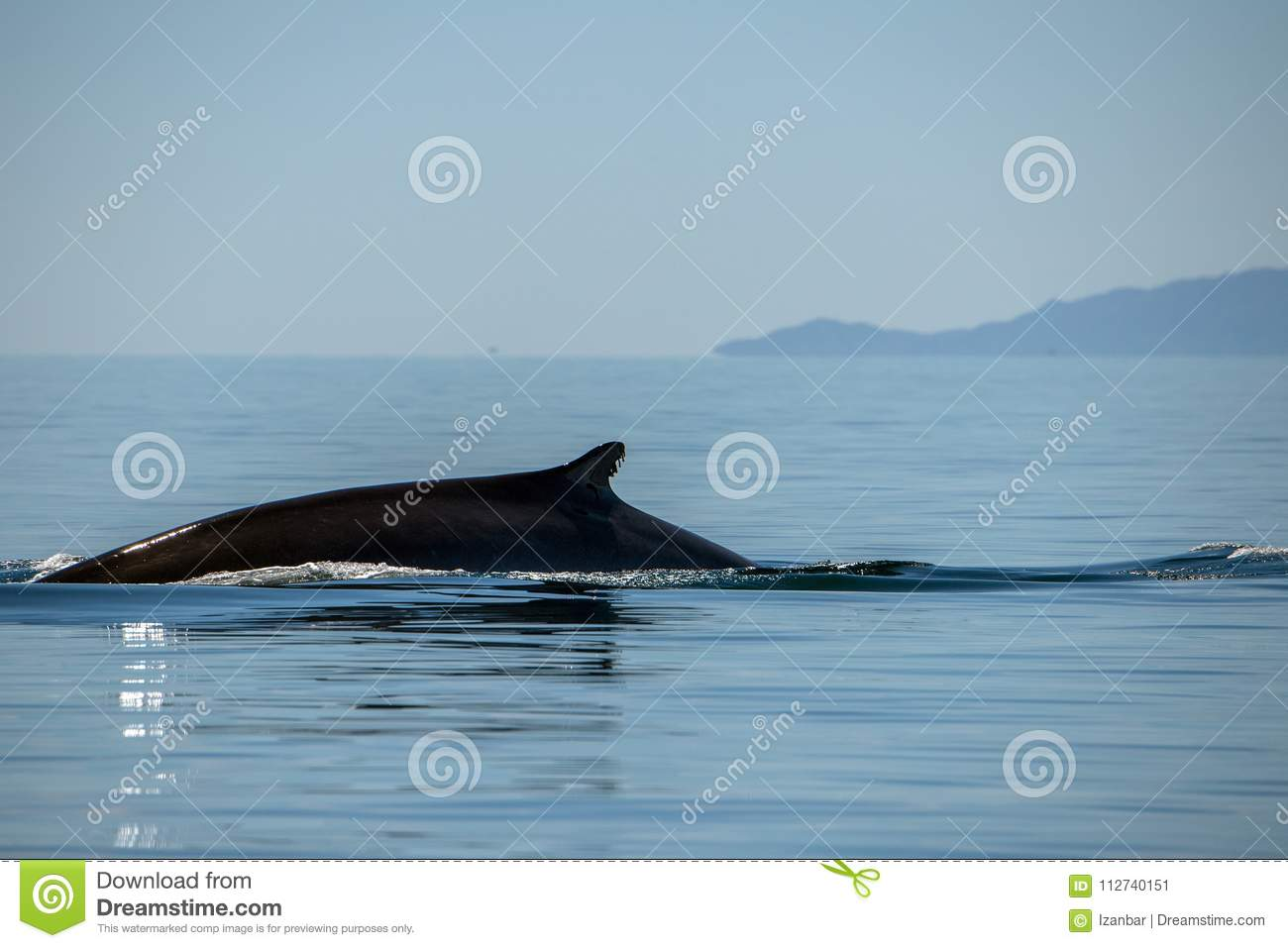 Blue Whale the biggest animal in the world