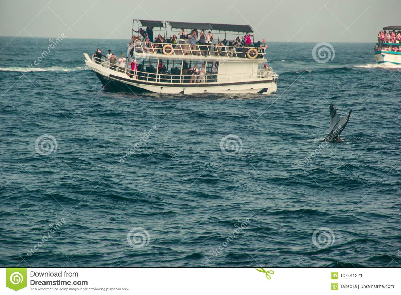 Blue whale tail fin diving deep, indian ocean. Wildlife nature background. Tourist impression. Adventure travel, tourism industry.
