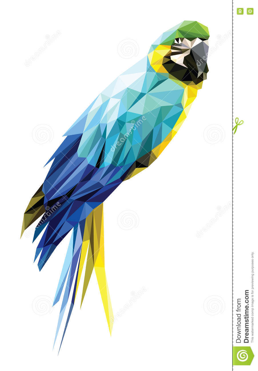 Blue And Yellow Macaw ...