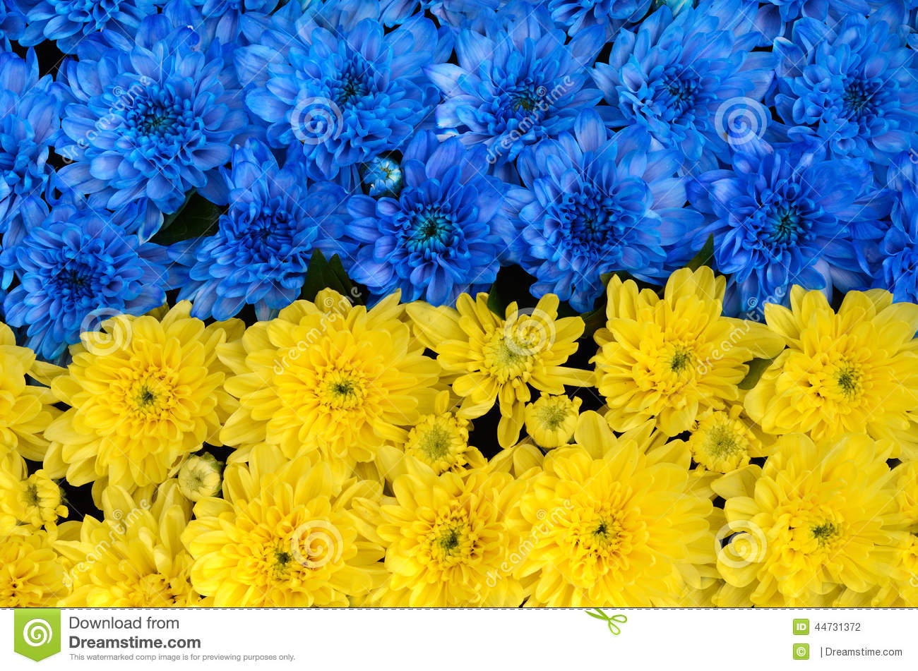 Blue and yellow stripes with colored flowers ukraine flag the download blue and yellow stripes with colored flowers ukraine flag the stock photo mightylinksfo
