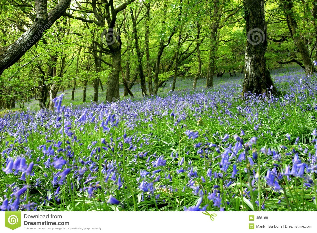 Bluebell-Fantasie-Land