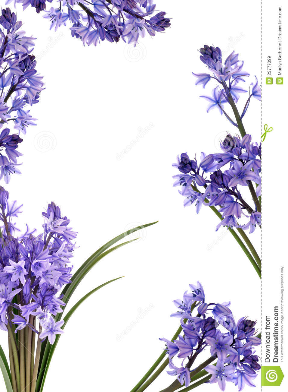 Bluebell Flower Border Royalty Free Stock Images - Image: 23777099
