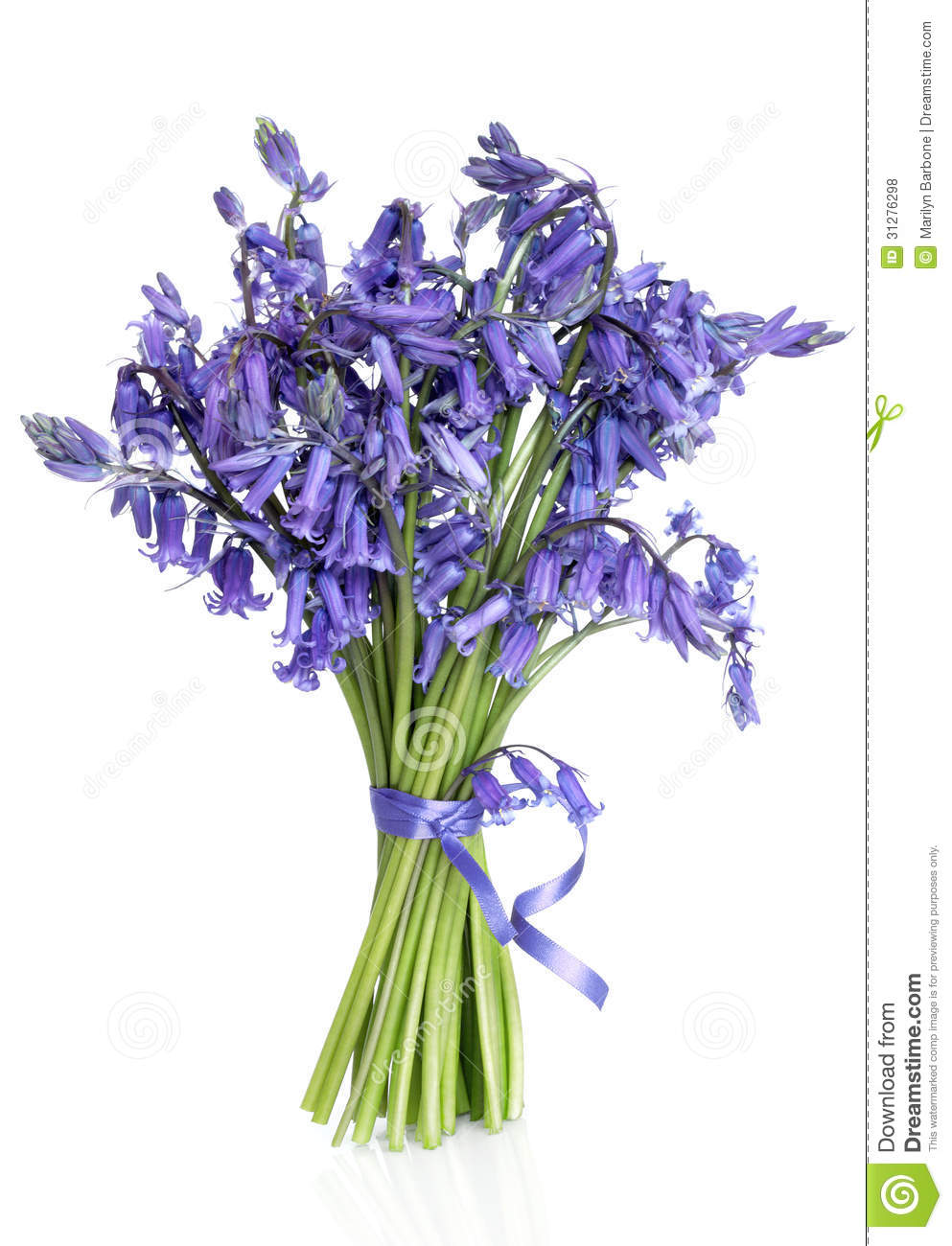 Bluebell flower posy stock photo image of flora bluebells 31276298 bluebell flower posy mightylinksfo