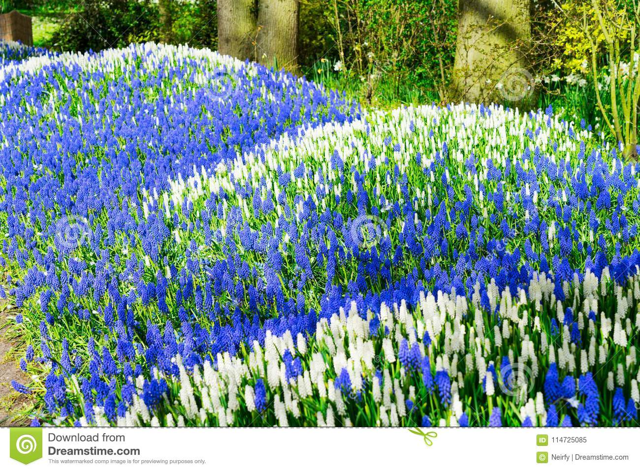 Bluebell flowers river stock image image of holland 114725085 download bluebell flowers river stock image image of holland 114725085 mightylinksfo