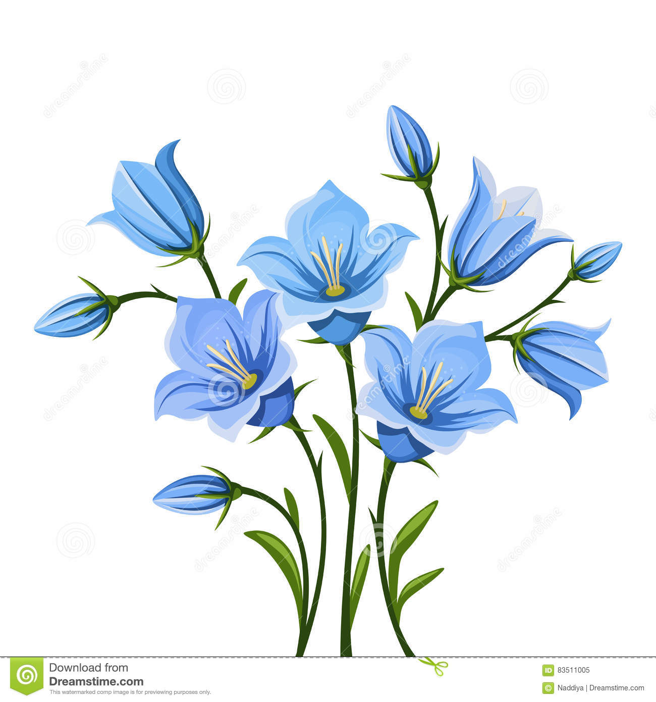 bluebell flowers vector illustration royalty free stock photo