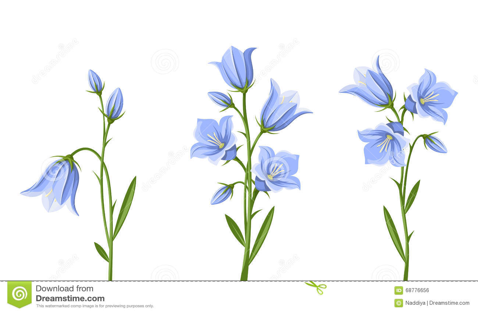 Bluebell Flowers Vector Illustration Stock Vector Illustration