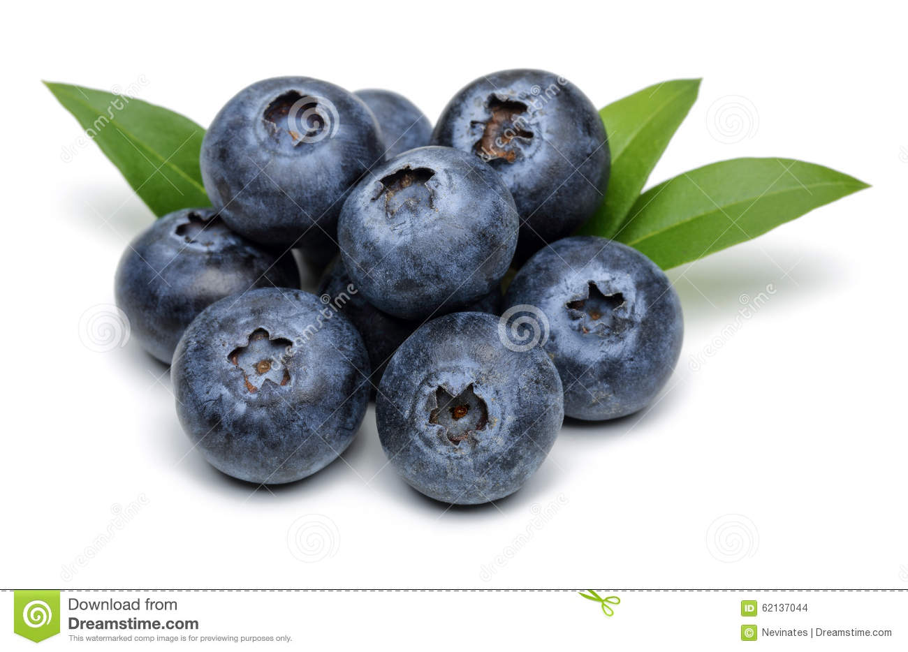 Isolated blueberries in a bowl  Creative Market