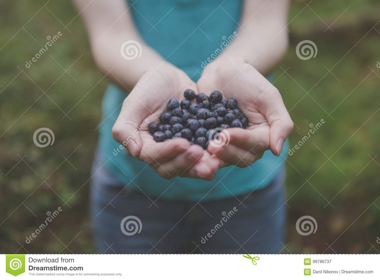 Blueberries In Woman Hands In Forest. Fresh Blueberries In ...