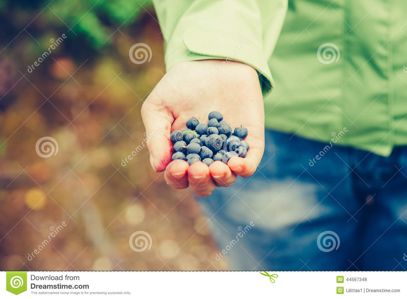 Blueberry fresh picked organic food in woman hand