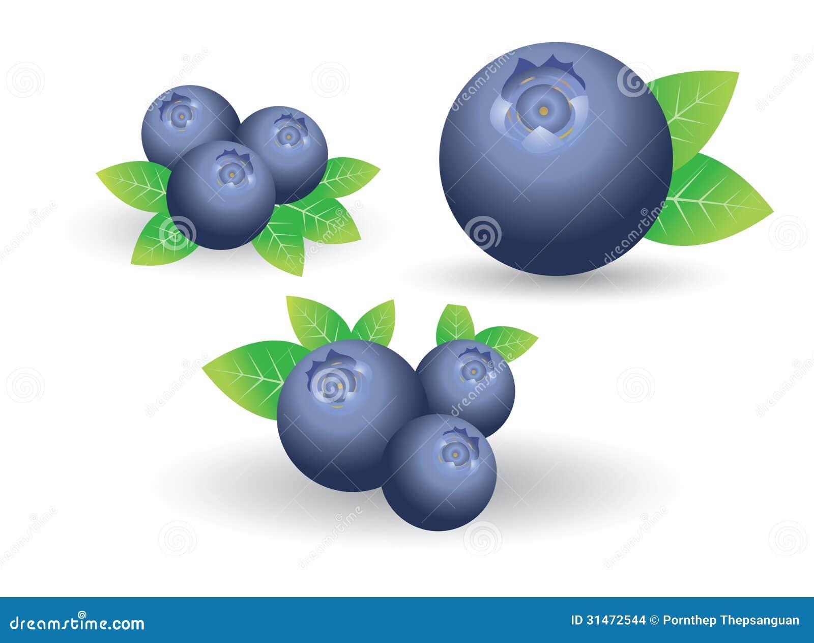 Blueberry Clip Art Blueberry vector on white