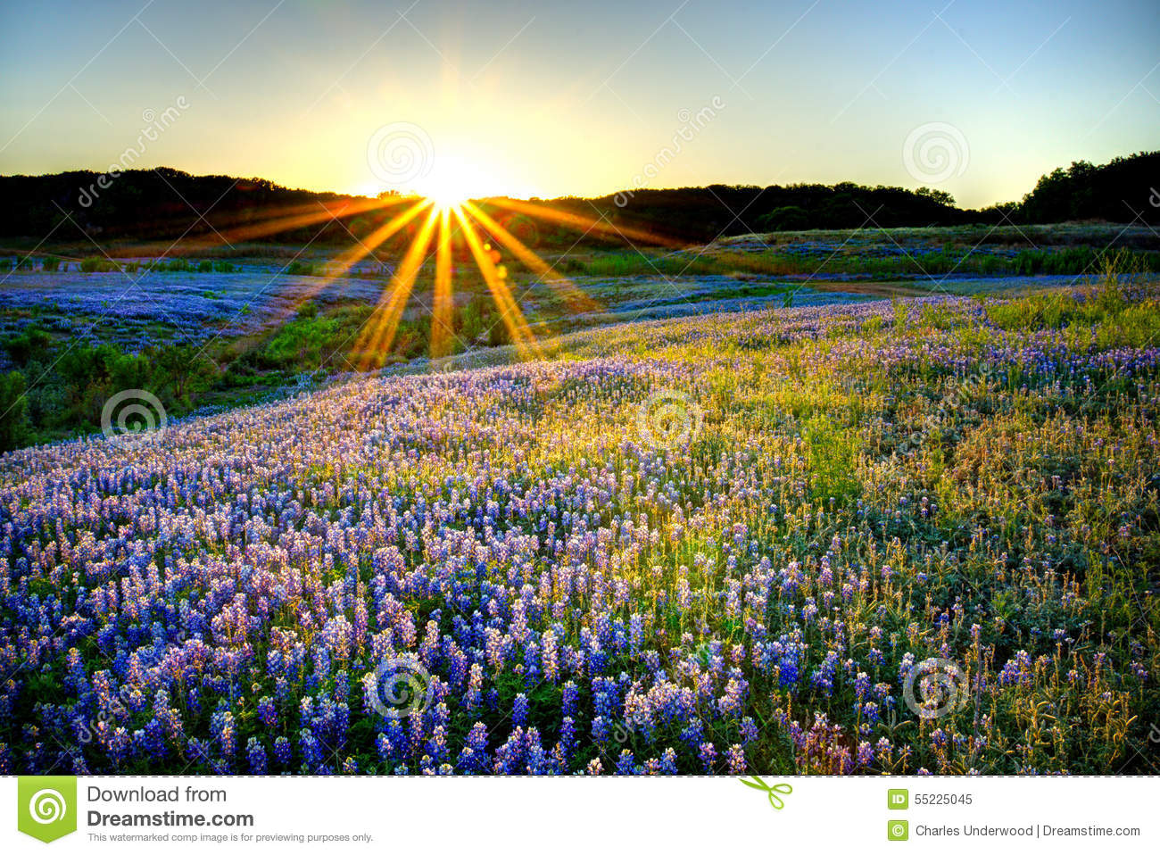 bluebonnet sunset stock photo image 55225045 country music clipart background country music clipart free