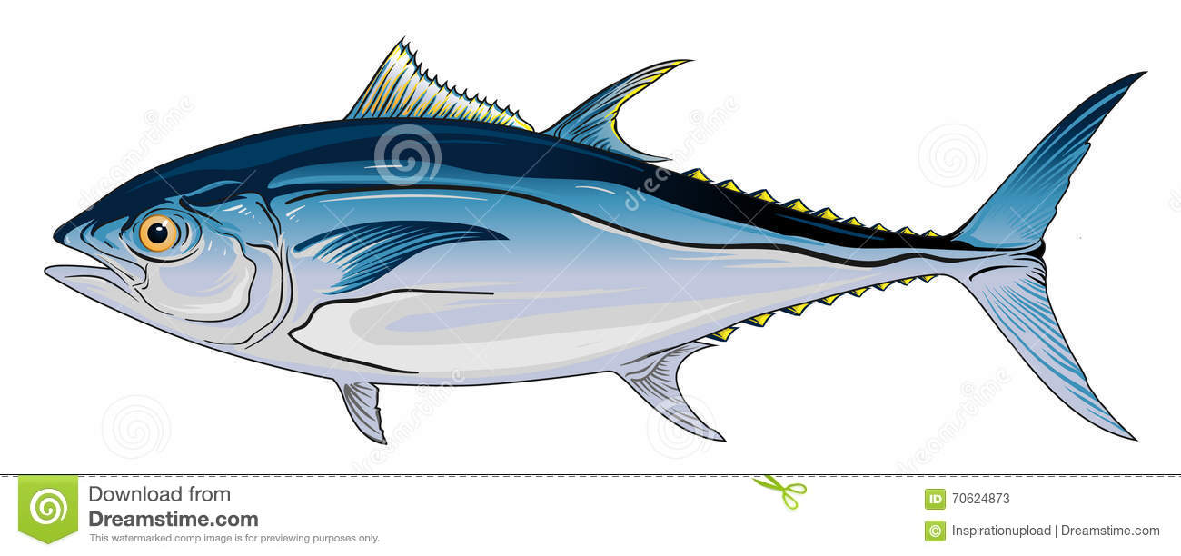Bluefin Tuna stock vector. Illustration of detailed, color ...