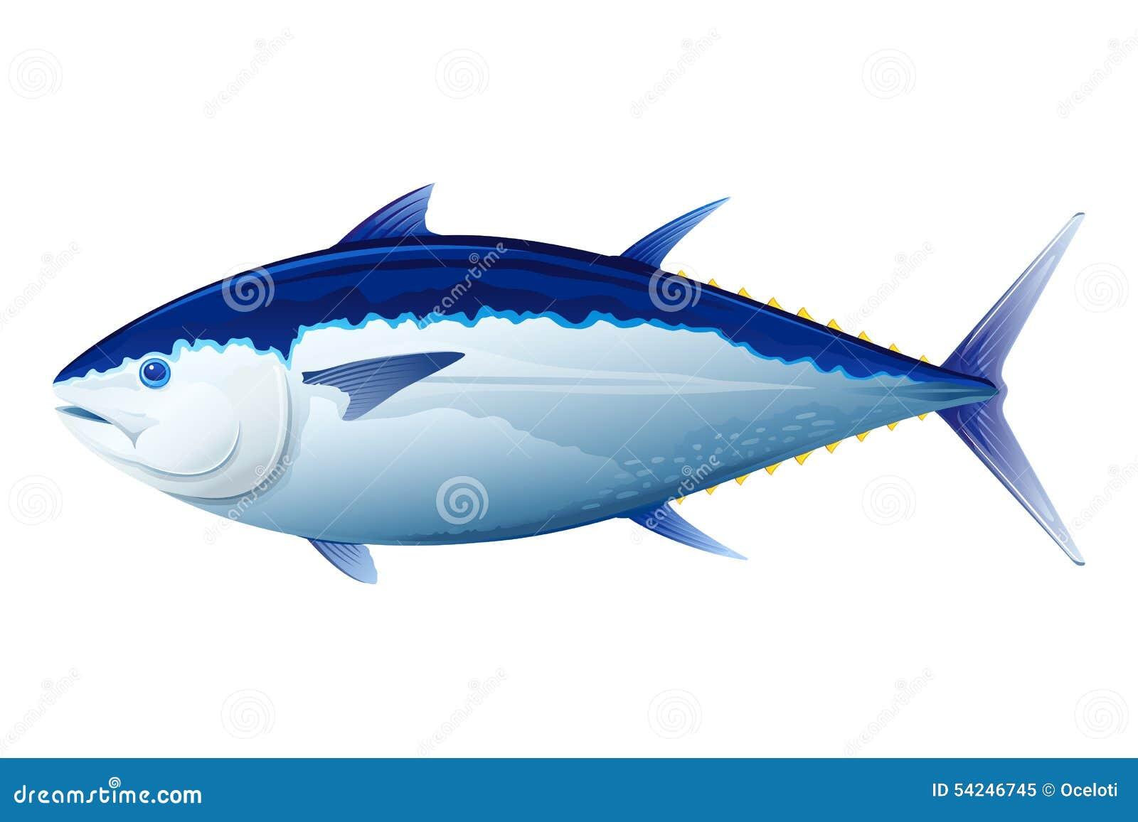 Bluefin tuna fish stock vector image of quality yellow for Tuna fish price