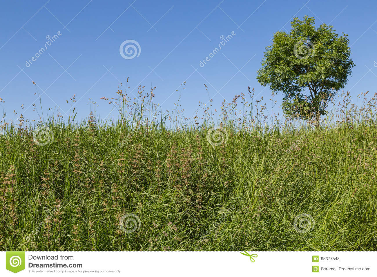 Bluegrass Meadow: Description and Use 22