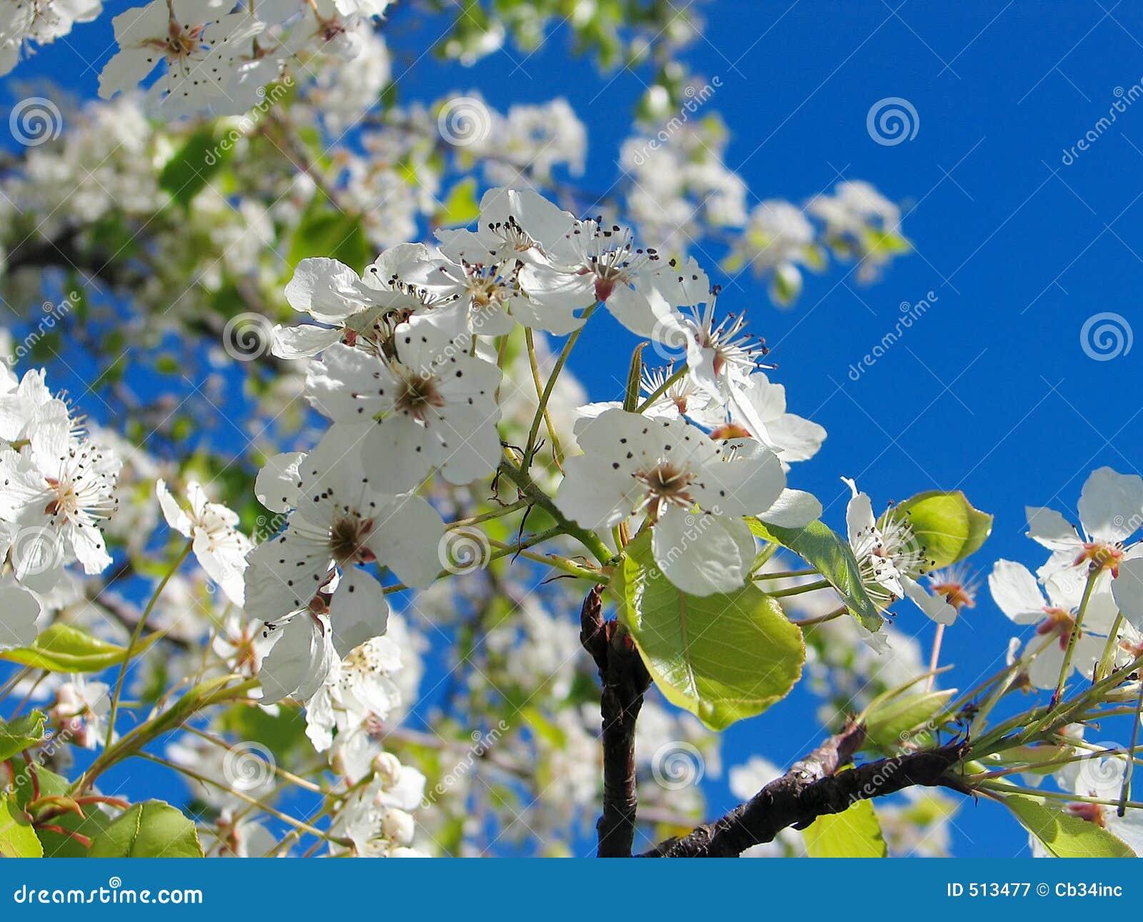 Blume auf Bäumen 4