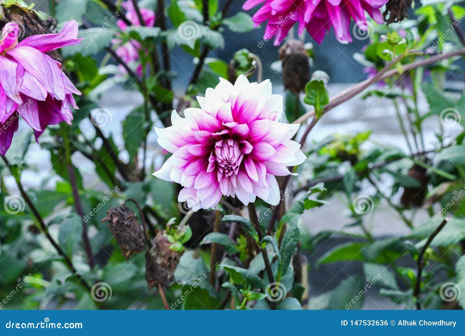 Blume in den Gartengrünblättern und im blaueren Hintergrund