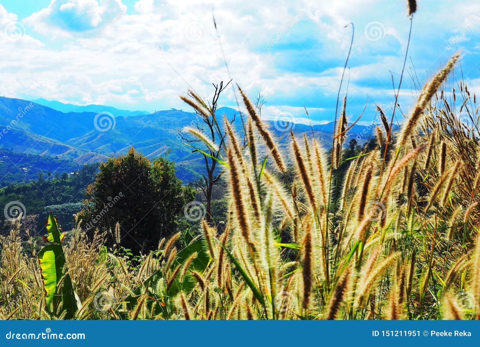 Blume des Grases auf die Oberseite des Hügels