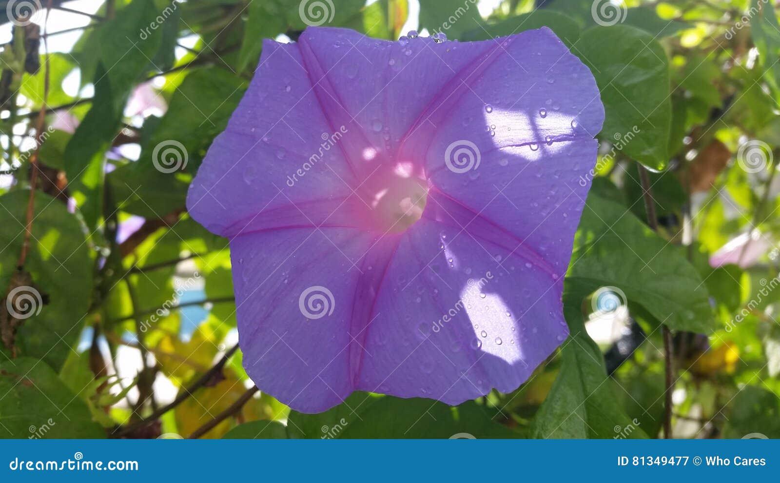 Blume für das Leben