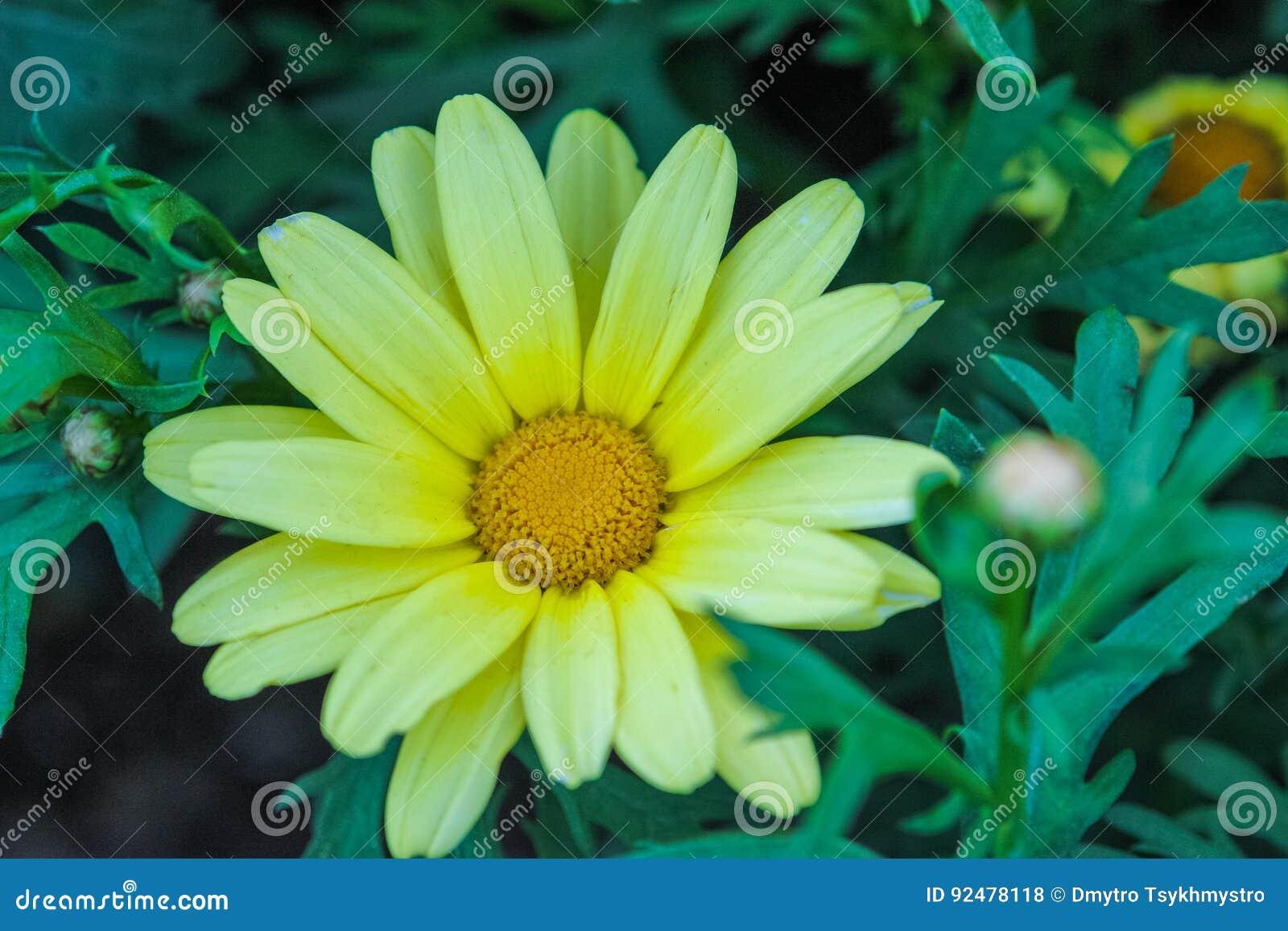 Blume im Park