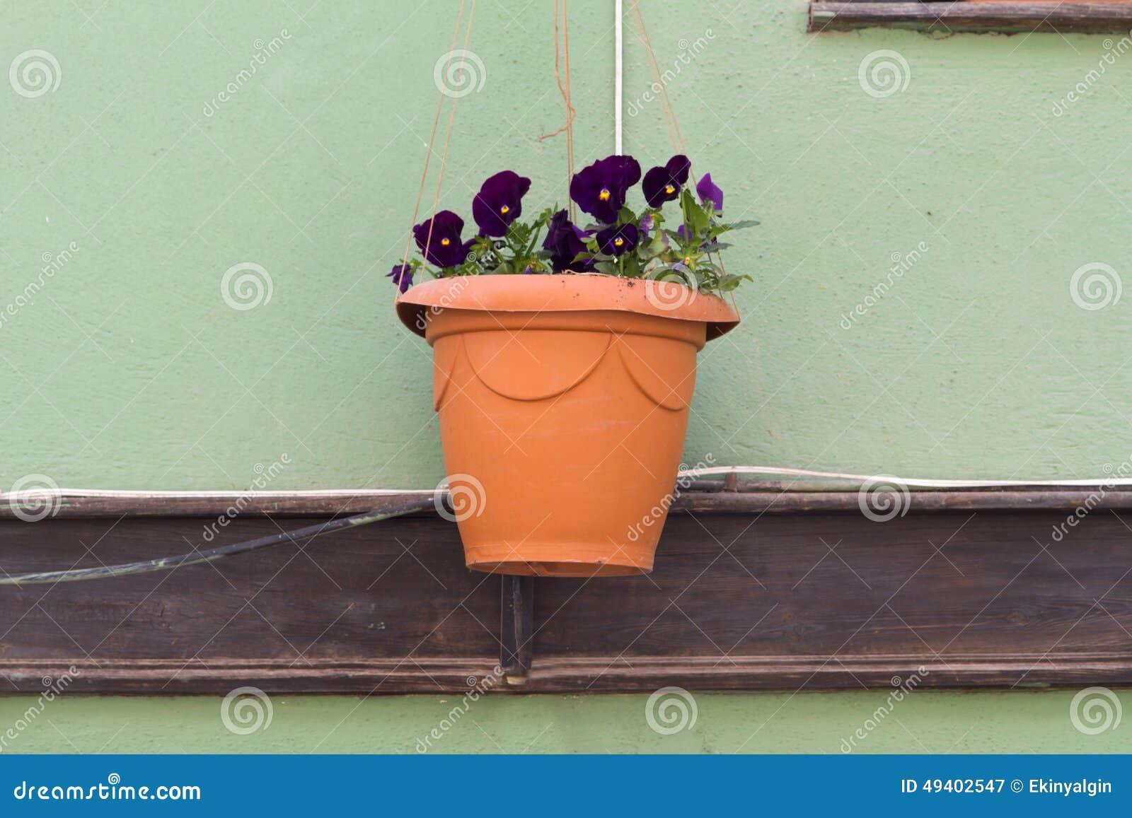 Download Blume im Topf auf Wand stockbild. Bild von blatt, tonwaren - 49402547