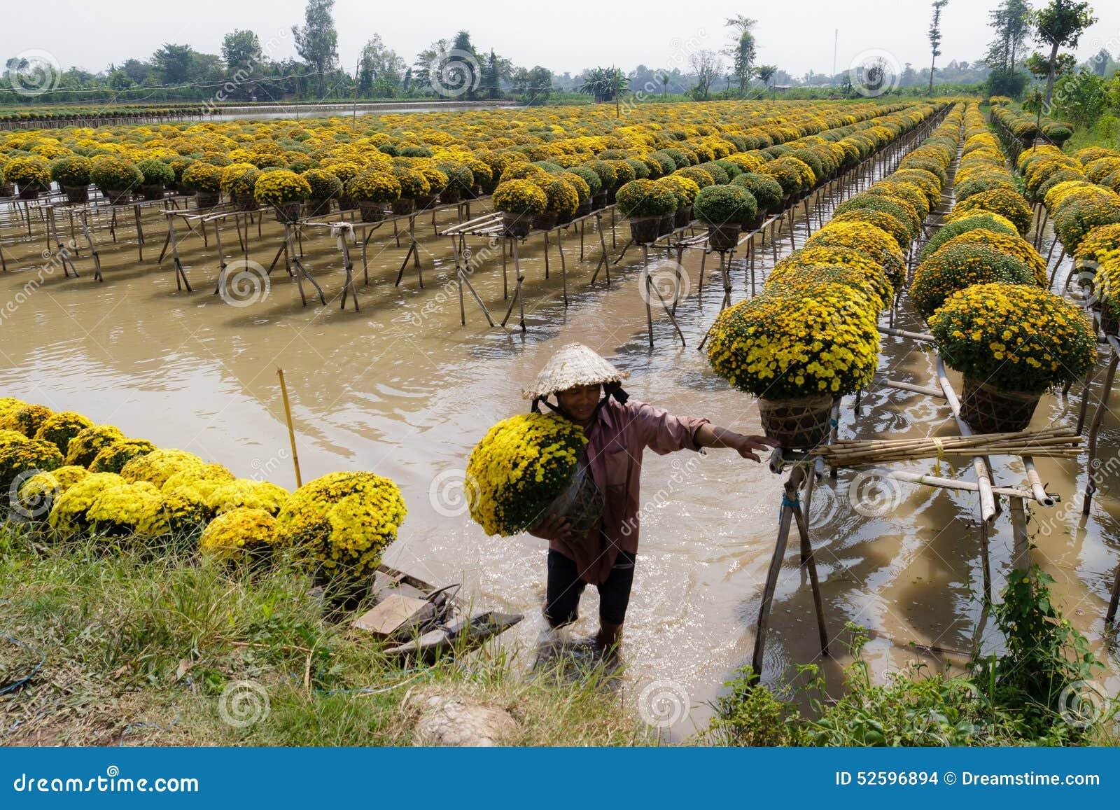 Blume Sadec, Vietnam