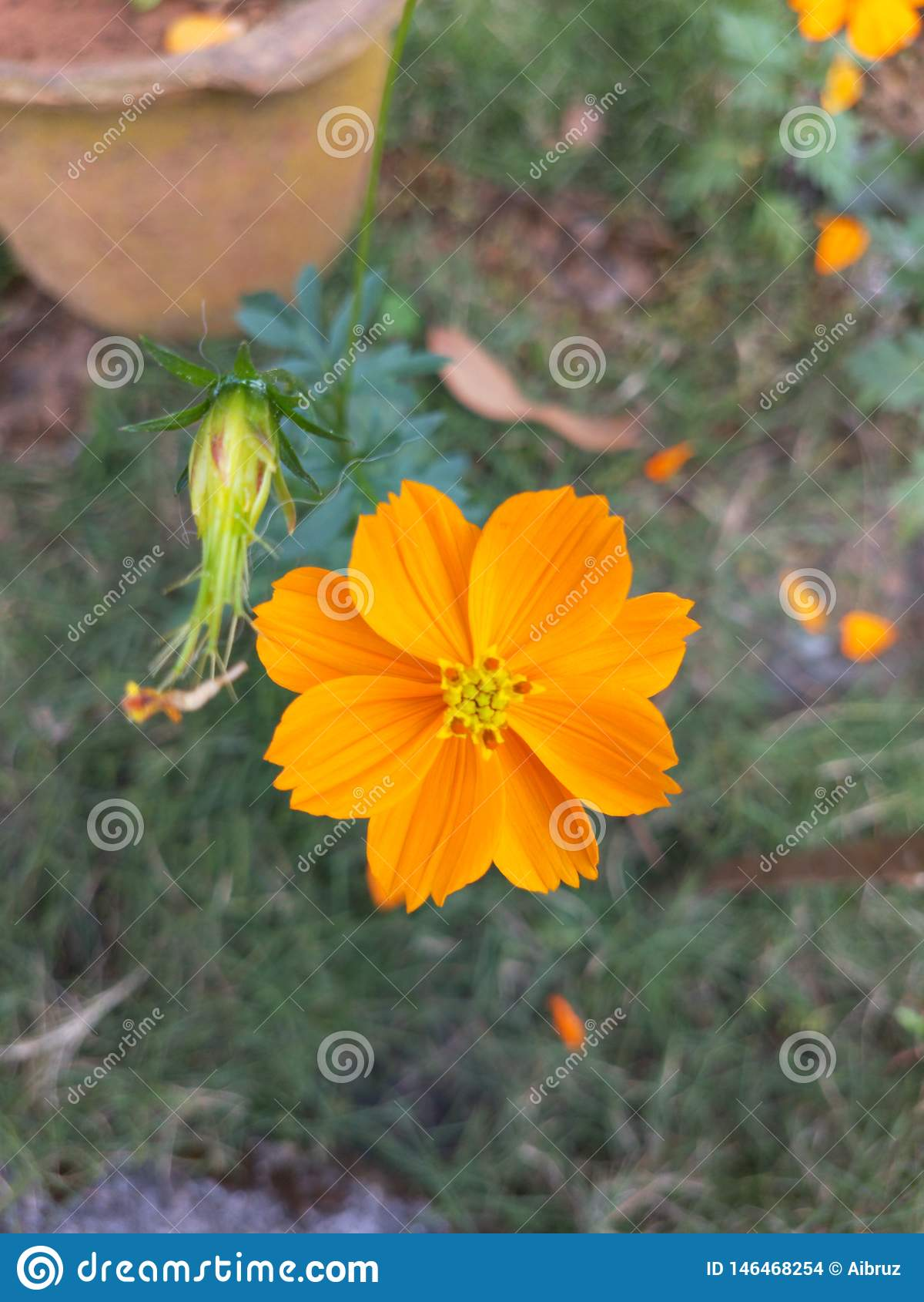 Blume an seiner Schönheit
