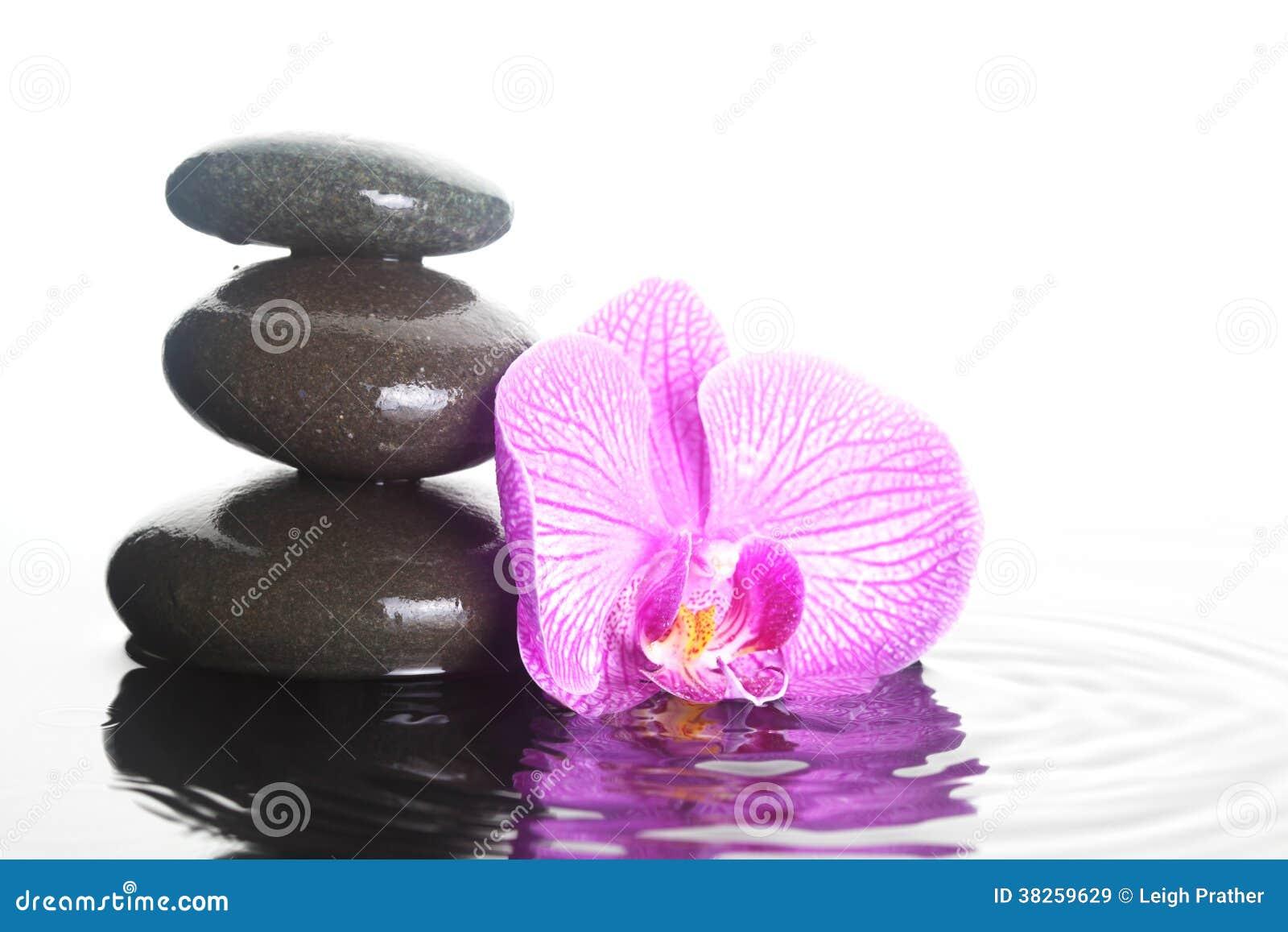 Blume Und Steine Im Wasser Stockbild Bild Von Floral 38259629