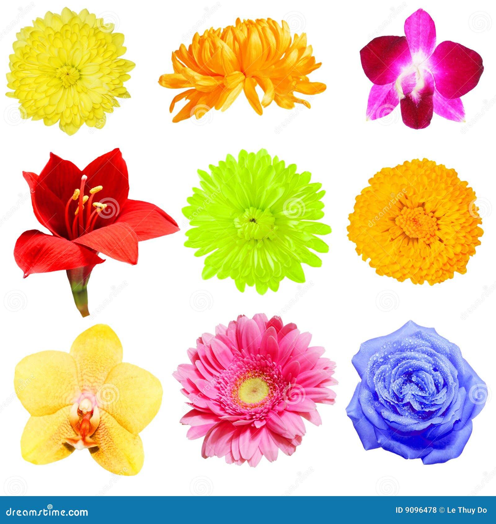 Blumen-Ansammlung